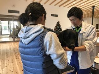 盲導犬協会出動2.jpg