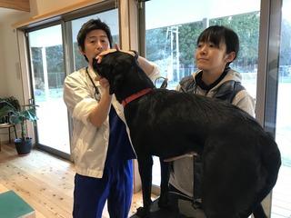 盲導犬協会出動3.jpg