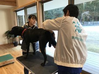 盲導犬協会出動4.jpg
