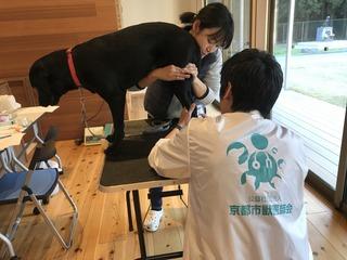 盲導犬協会出動5.jpg