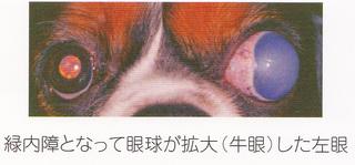 緑内障-3.jpg