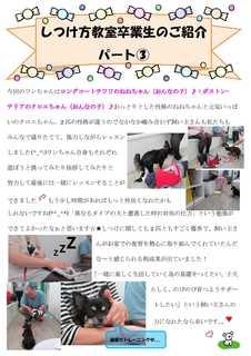 パピークラス新聞�Bねね・クロエ.jpg