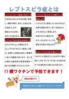 レプトスピラ→ワクチン.jpg