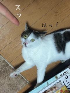 矢嶋1.JPG