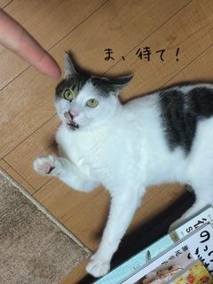 矢嶋3.JPG