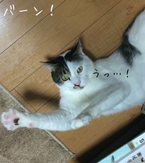 矢嶋4.JPG