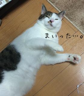 矢嶋5.JPG